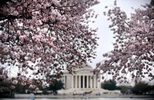 XW BestOf Travel - Cherry Blossoms